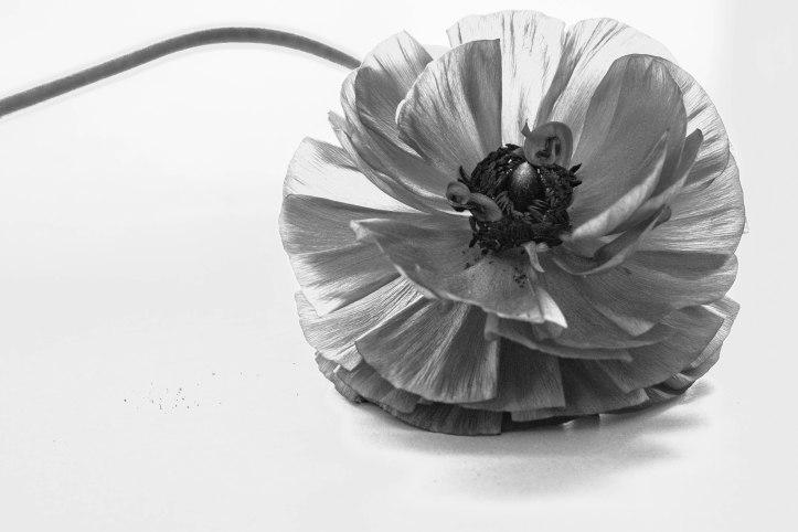 Blütenzauber (12 von 18)
