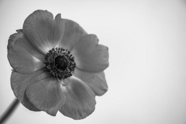 Blütenzauber (2 von 18)