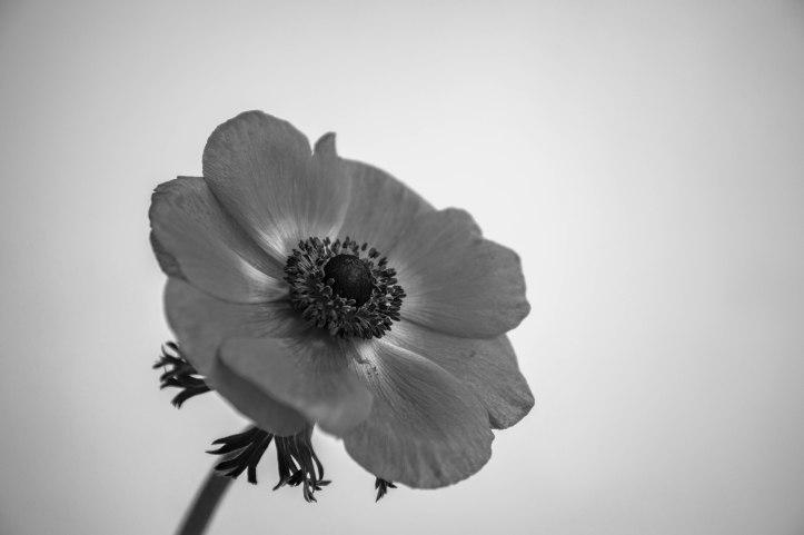 Blütenzauber (6 von 18)