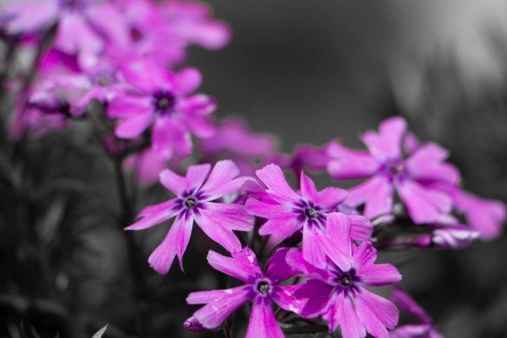 Blütenstand (16 von 93).jpg