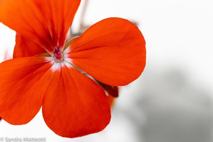 Blumen-0106.jpg