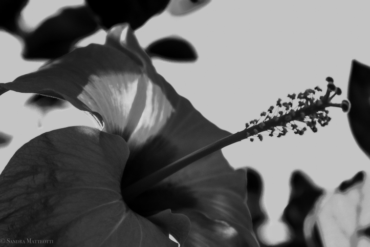 Blumen-0244