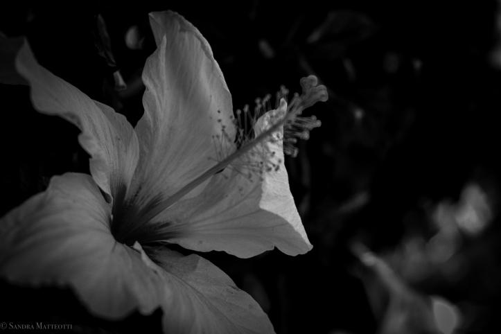 Blumen-0246