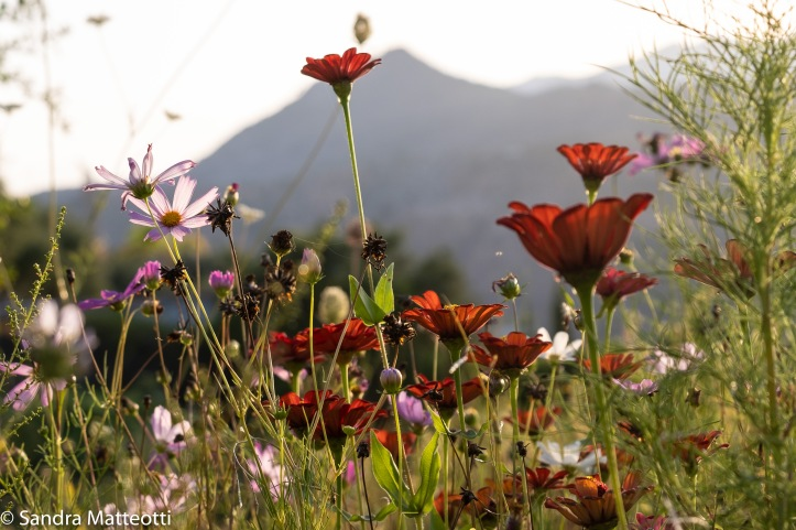 Blumenwiese-1834.jpg