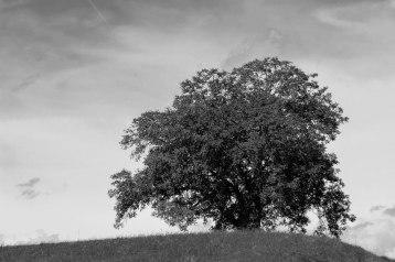 Ein Baum (1 von 3)
