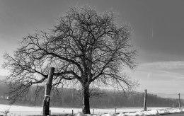 Ein Baum (3 von 3)