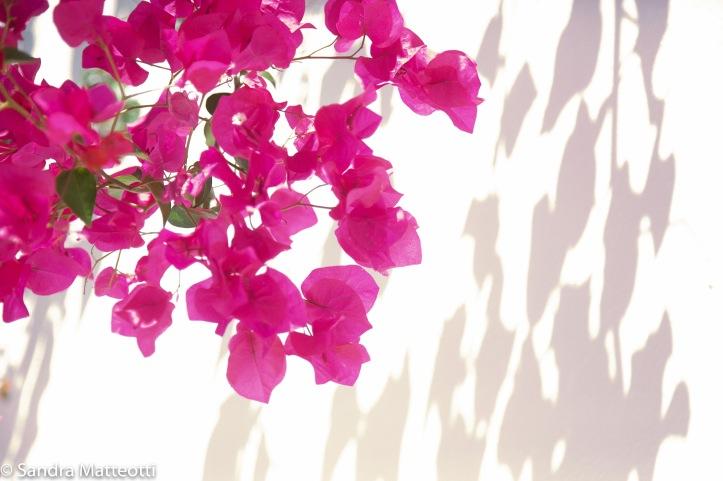 Pink mit Schattenwurf-9545.jpg