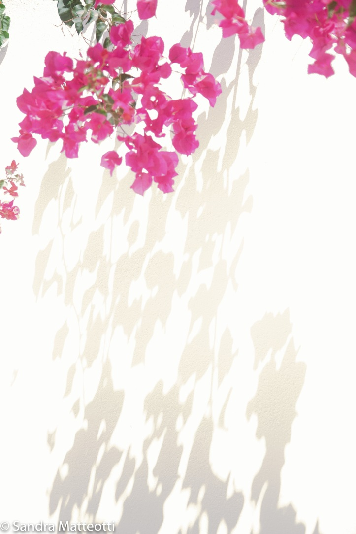 Pink mit Schattenwurf-9546.jpg