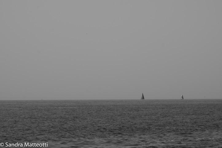 Segel am Horizont-2156