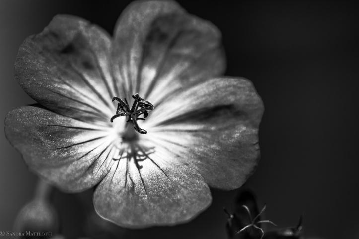 Blüten-1937.jpg